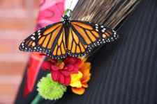 monarch on corsage